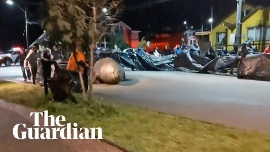 VIDEO. Un éléphant de mer bloque un quartier