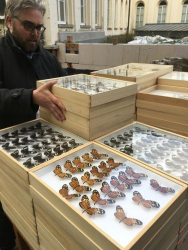 As if it were Christmas: we received 143 boxes of Heliconius